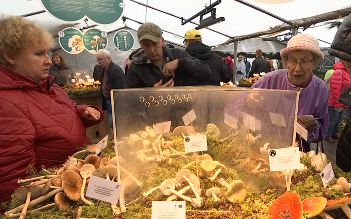 Выставка грибов.