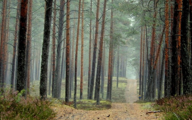 Forest (picture is illustrative).