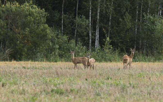 Больше всего несчастных случаев с лесными животными происходит в вечернее время, меньше всего – в полдень.