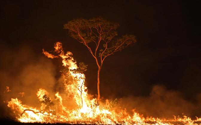 Amazonase vihmametsa põlengud.