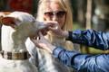 Kalamaja parki kogunesid koerad hambapesurekordit püstitama