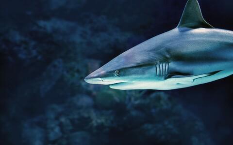 Nüüdisaegsed haid näevad ära märkimisväärselt teistsugused kui nende iidsed sugulased