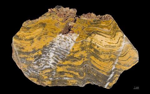 Baumgartneri ja kolleegide leitud orgaaniline aine asus kivimis enamasti püriidikristallide vahel.