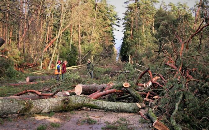 Rootsi metsades ulatus Gudruni majanduslik kahju 20 miljardi euroni.