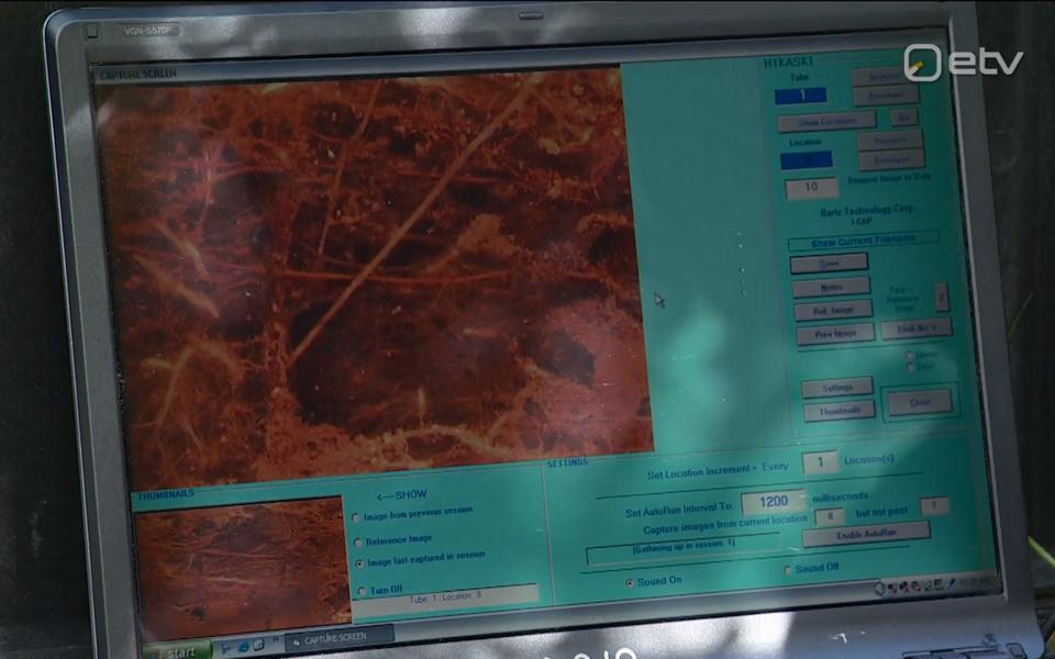 See, mida n-ö udutamine puujuurtega teeb, uurib Kaarin Parts aga umbes 10 000 eurot maksva juurekaameraga, mille pilti saab vaadata arvutist.
