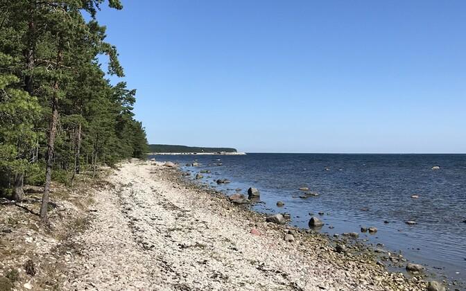 Eesti rannajoon