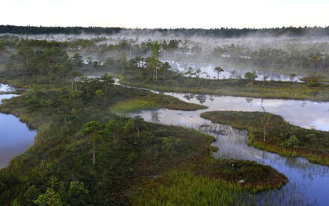 Высыхающие болота в Эстонии выделяют в несколько раз больше CO2, чем все транспортные средства в стране.