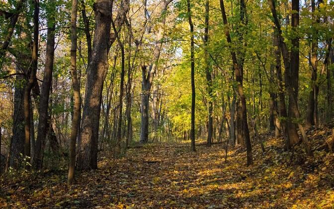 Analüüsi kohaselt saaks maailmas puid istutada vähemalt 900 miljonile hektarile.