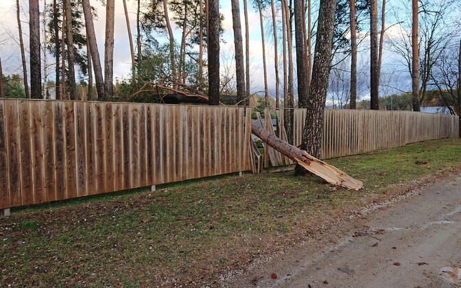Aftermath of Sunday's storm which affected huge swathes of southern and western Estonia.