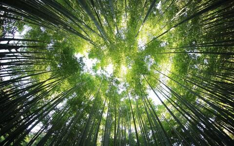 Metsade kliimamuutusi leevendav toime püsib seni, kuni nende biomassi varud suurenevad, kuid on olemas ülemine piir sellele kui tihe mets saab olla.