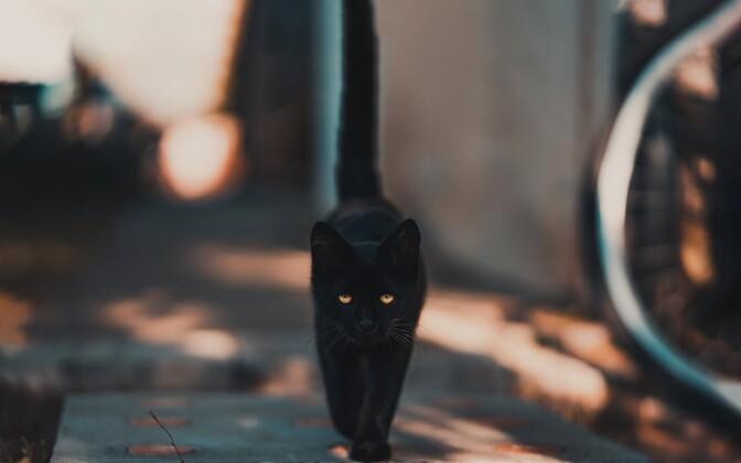 Черная кошка.