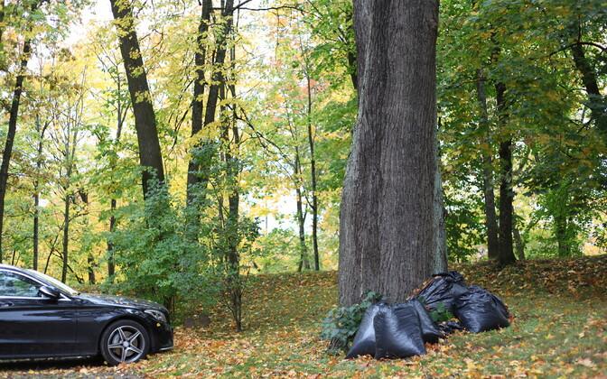 Не все садовые отходы перегнивают. Таллиннцы могут сдать их бесплатно.