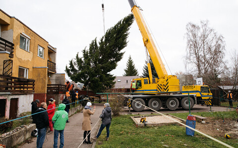 This year's Christmas tree was found on Rõika tänav in Tallinn's Haabersti District.