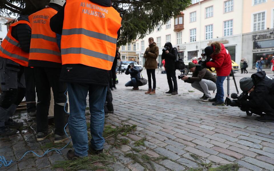 Tallinna Raekoja platsile püstitatakse homme jõulukuusk, mis on kasvanud siinsamas pealinnas Rõika tänaval