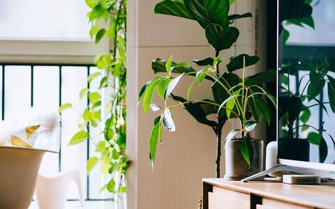 Teadlased leidsid, et kõigis avaldus taimede toime palju aeglasemalt kui toaõhk tavalises toas vahetuks.