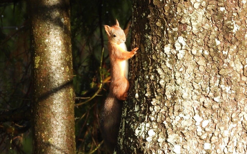 Loomad sügise ootuses, Lääneranna vald Pärnumaal