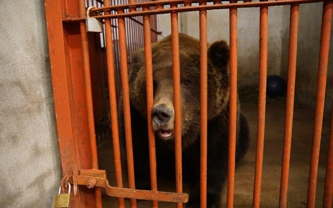 Prosha the bear.