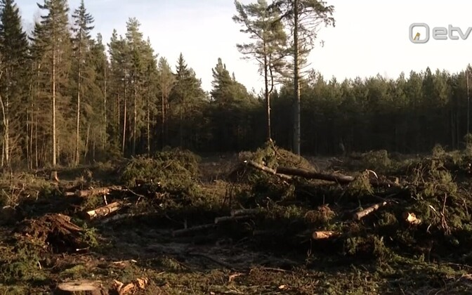 The felled trees at Paope village on Hiiumaa.
