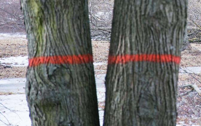 Деревья. Иллюстративное фото.