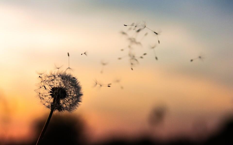 Pärast 2010. aastat seevastu on tuule kiirus kokku umbes 17 protsenti kasvanud.