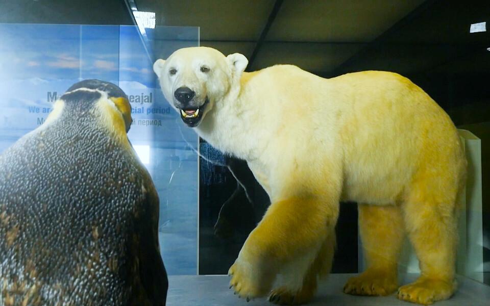 Музей Ледникового периода.