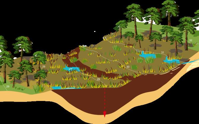 Kanna allikasoo paiknemine Saaremaa kõrgustiku nõlval (punase noolega on tähistatud uuritud läbilõike asukoht).