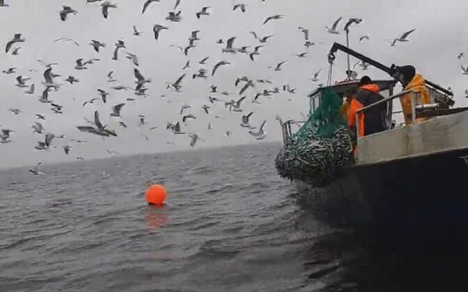 Министерство окружающей среды хочет изменить условия сопутствующего лова. Иллюстративная фотография.