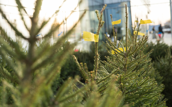 Продажа новогодних елок.