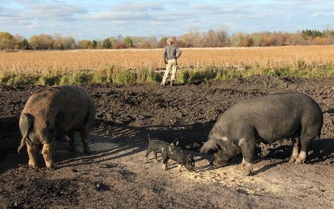 Eesti põllumehed lähevad madalate toetuste pärast Toompeale meelt avaldama.