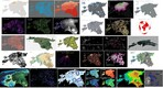 All 30 of Evelyn Uuemaa maps for #30DayMapChallenge