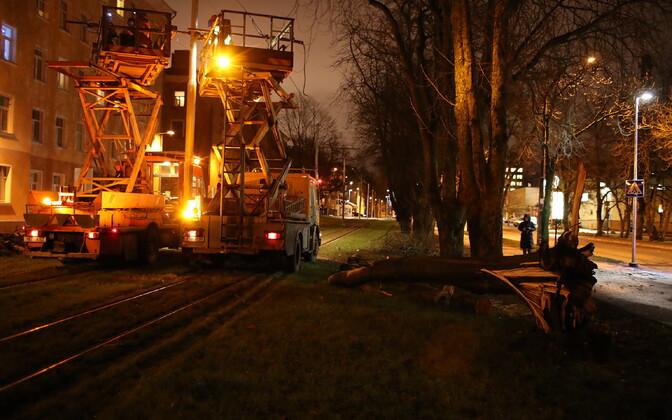 Fallen tree moved from Tramline in Kopli, Tallinn.