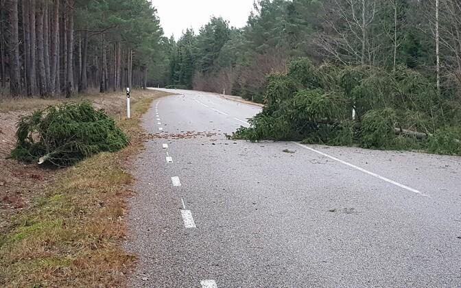 Storm damage in Saaremaa. December 18, 2019.