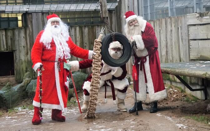 Santa Clauses at Tallinn Zoo.