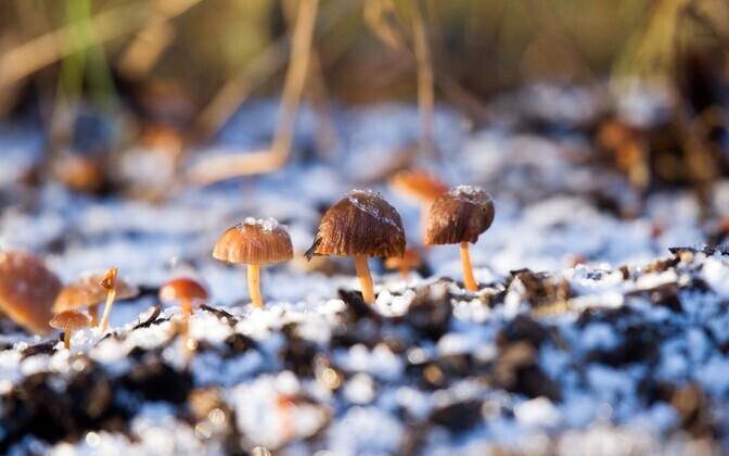 Wild mushrooms in January 2020.