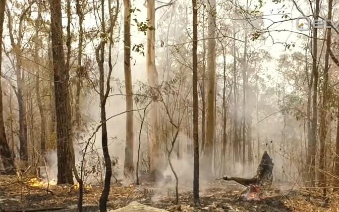 Лесные пожары бушуют в Австралии с сентября прошлого года.