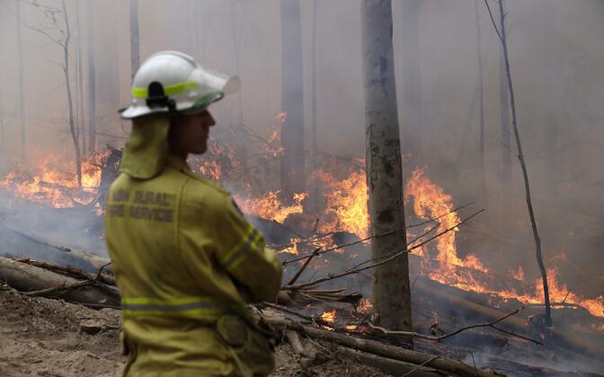 Austraalia tuletõrjuja.