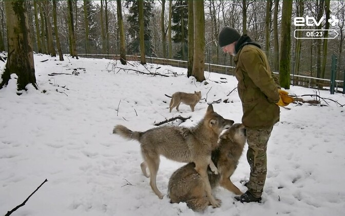 В Эстонию вернулась собачья чумка.