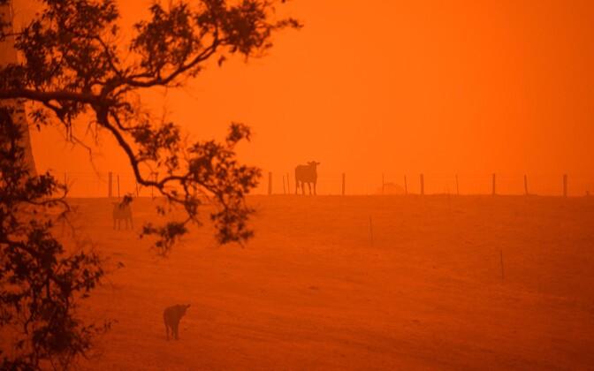 Põlengud Austraalia Ida- ja Lõunaosas värvisid taeva punaseks.