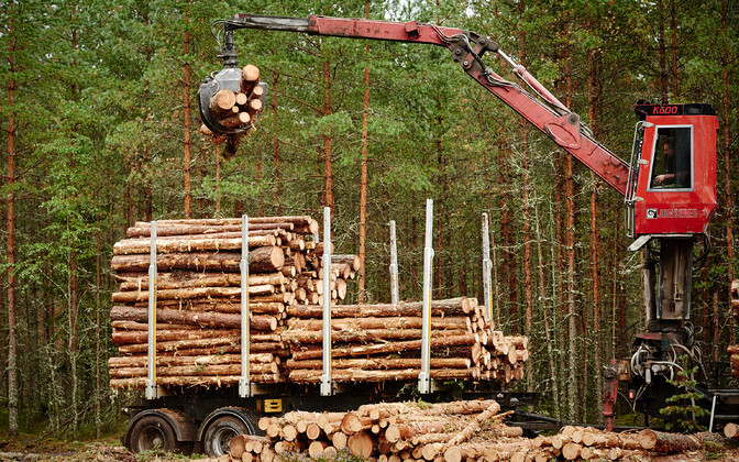 Timber work (picture is illustrative).