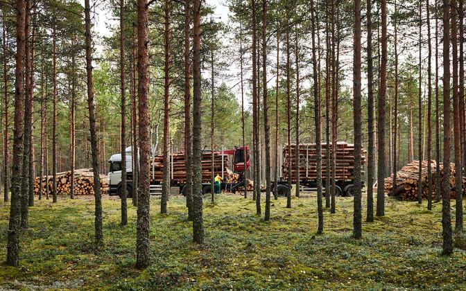 Metsatööd