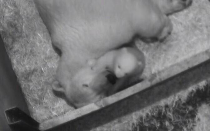 Медведица Нора с детенышем.