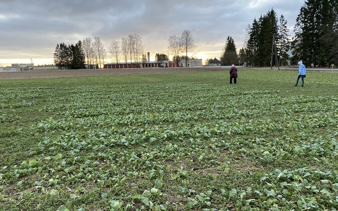 Test fields at the Estonian Crop Research Institute just outside of Jõgeva. January 2020.