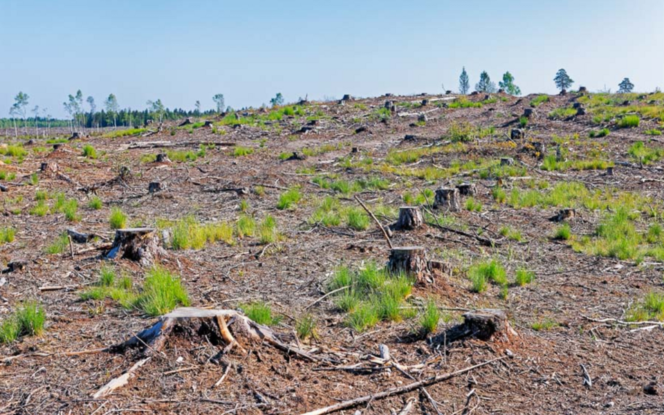 Lageraie Eesti keskmises puistus võimendab kliimamuutust vähemalt 60 aasta jooksul peale raiet.