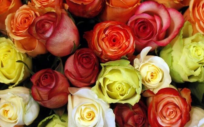 Kui olla õppimise ja magamise ajal näiteks roosilõhna keskel, siis jääb õpitu paremini meelde.