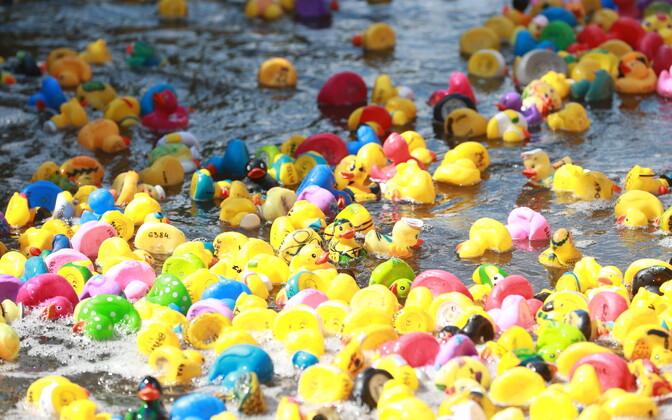 Charity Duck Race.
