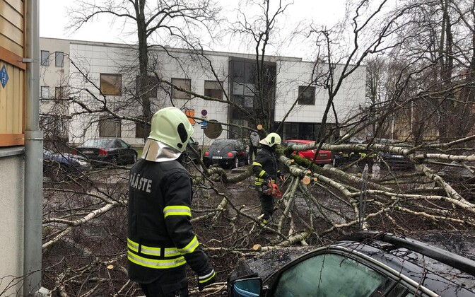 Tormituulega langenud puud autodel.