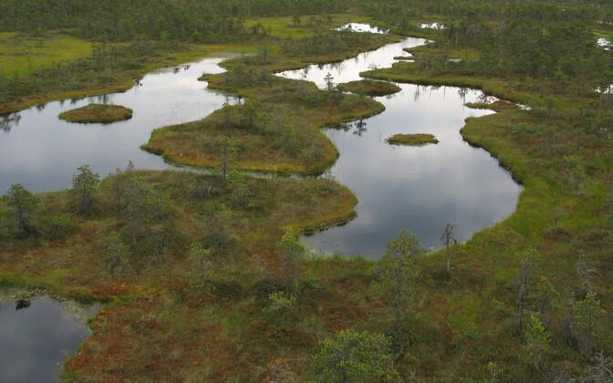 Эстонские болота.