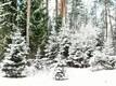 Lumi veebruaris Soome külas