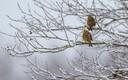 Lumi veebruari lõpus Sakus