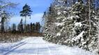 Lumi veebruari lõpus Lääne-Virumaal